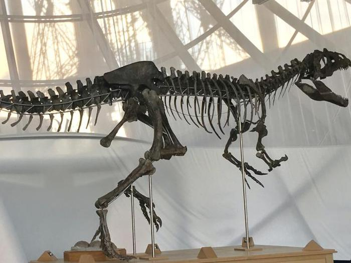 AGUTTES: uno scheletro di dinosauro carnivoro venduto a giugno al primo piano della Torre Eiffel per 2.019.600 euro