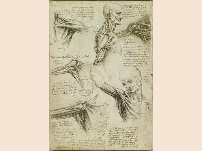 Leonardo da Vinci, The Anatomy of the Shoulder and Neck (Royal Collection Trust/© Her Majesty Queen Elizabeth II 2019)