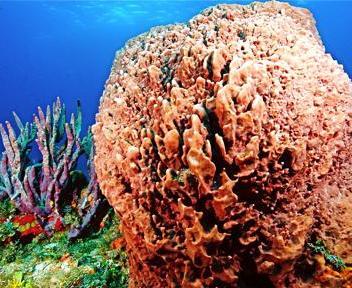 Eleuthera il gioiello delle bahamas il sole 24 ore for Ponte delle cabine di rapsodia dei mari 2