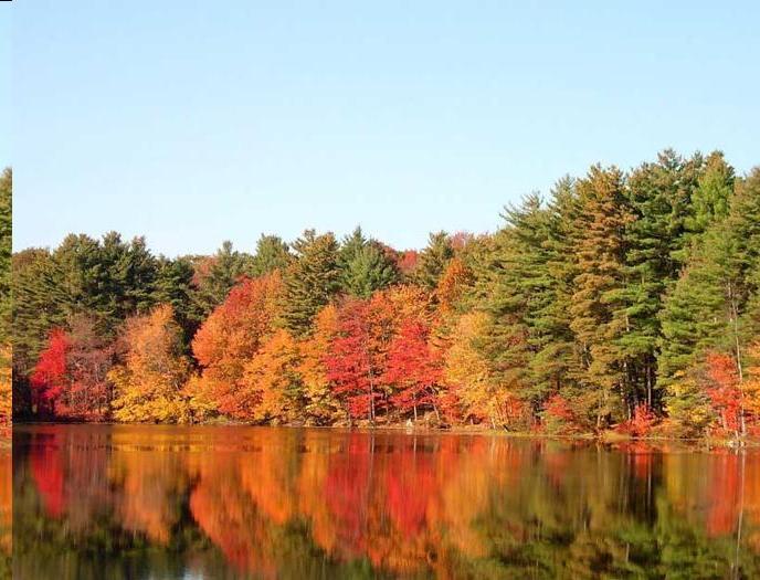 Il colori tipici della stagione del fall foliage in Massachusetts (PH massvacation)